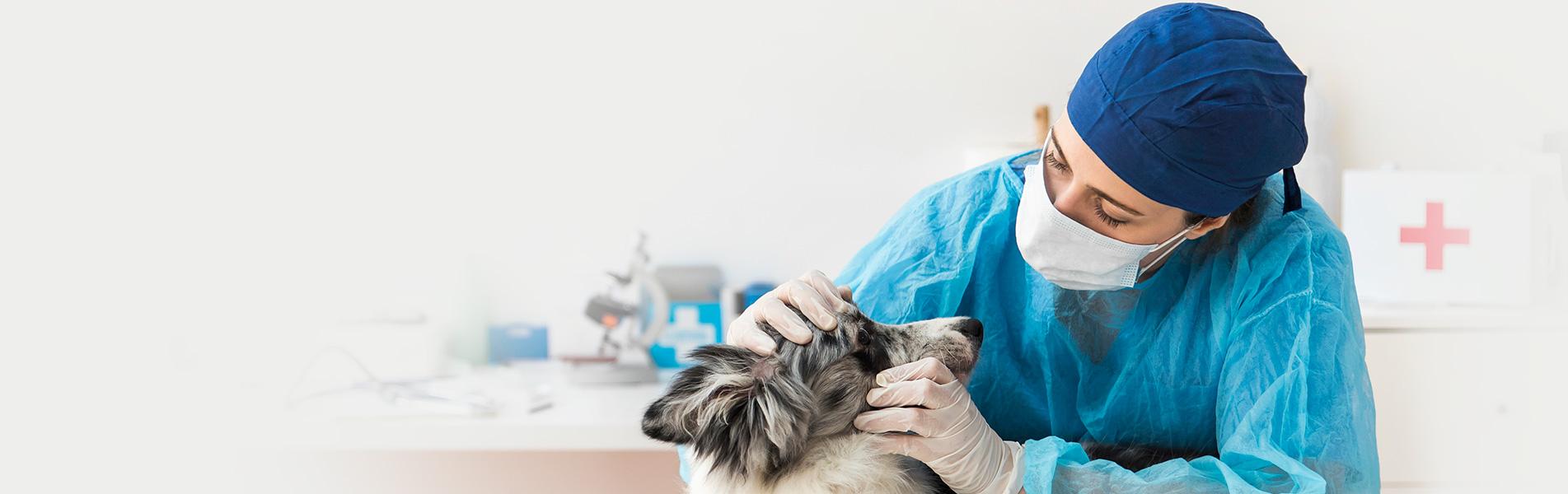 Вакцинация собак и щенков - Умная ветеринария